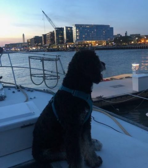 Gangplank Marina at The Wharf DC is Home to Many Dogs