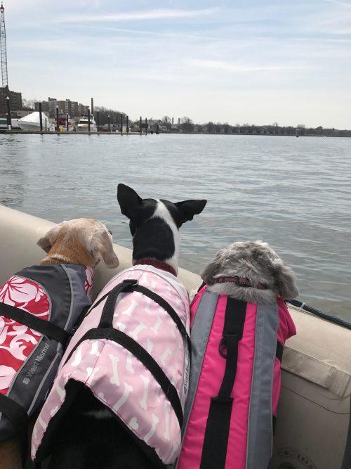 Gangplank dogs